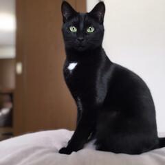 黒猫/フォロー大歓迎/ペット仲間募集/猫/にゃんこ同好会/ペット モデルポーズニャ🎶