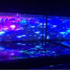 アクアリウム/夏休み/金魚/おでかけ 2017金魚アクアリウム📸続き…夏を感じ…(4枚目)