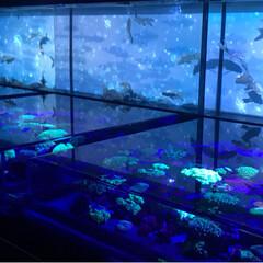 アクアリウム/夏休み/金魚/おでかけ 2017金魚アクアリウム📸続き…夏を感じ…(3枚目)