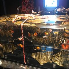 アクアリウム/夏休み/金魚/おでかけ 2017金魚アクアリウム📸続き…夏を感じ…(1枚目)