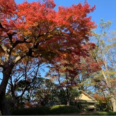 散歩/徳川昭武/戸定邸庭園/紅葉 散歩がてらに駅から歩いて10分❗️ 戸定…