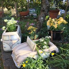 鉢植え/ガーデニング同好会/フォロー大歓迎/はじめてフォト投稿/風景/雑貨/... 草抜き片付けられなくて鉢植えの下に雑草を…