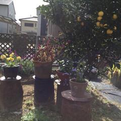 生徒作品/思い出/風景 教え子の作品が、腰掛けにしたり、庭の鉢置…