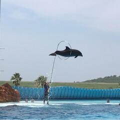 イルカのショー/令和の一枚/フォロー大歓迎/LIMIAファンクラブ/LIMIAおでかけ部/おでかけ/... 楽しそうに泳いで輪の中へ飛んで潜るなんて…