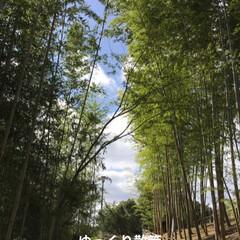 高山竹林園/おでかけ/フォロー大歓迎/はじめてフォト投稿 秋晴れの空の下 日本唯一の茶筅の産地とし…