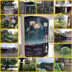 建築/松柏美術館/ジャックダニエルチョコレート/お庭あそび/スタミナ丼/夏に向けて/... こんばんは。奈良県の三代にわたる日本画家…