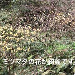 ドライブ/史跡/LIMIAおでかけ部/フォロー大歓迎/はじめてフォト投稿/おでかけ/... 宇陀松山城跡へ桜祭りに来たけど、桜が咲い…(2枚目)