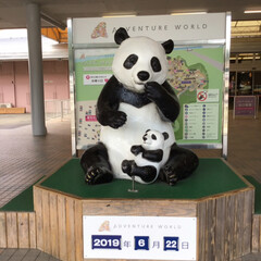 パンダ/令和の一枚/フォロー大歓迎/LIMIAおでかけ部/おでかけ/風景/... パンダに会いたくてアドベンチャーワールド…