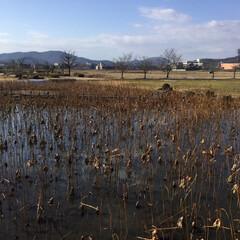冬景色/フォロー大歓迎/おでかけ/旅行/風景 備中高松城跡の蓮の池 凍えそうに寒かった…