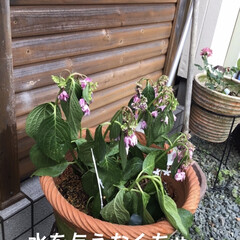 花のある暮らし/紫陽花 おはようございます。帰宅したら紫陽花がし…(2枚目)