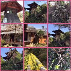浄土庭園/お花見シーズン/ドライブ/中将姫/當麻寺散歩 當麻寺中の坊の蔵にカメラ撮影は、ダメなの…