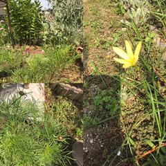 花のある暮らし/ガーデニング植物/コスモス/LIMIAファンクラブ/LIMIA/雨季ウキフォト投稿キャンペーン おはようございます。水やり時にコスモスと…