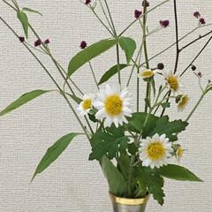 暮らし/ワレモコウ/草花/庭の花/洋室/雑貨/... 庭のお花を摘み取っていただいてから…… …