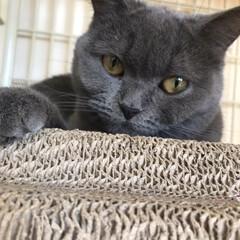 ネコ 今日、2月22日はニャンコの日ですね。 …(2枚目)
