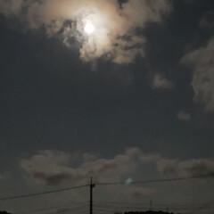 照明 最近は毎日のように、月明かりがとてつもな…(1枚目)