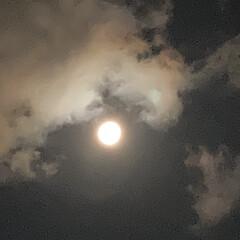照明 最近は毎日のように、月明かりがとてつもな…(2枚目)