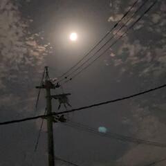 「昼のように、明るい月です🌕 見惚れて、眠…」(1枚目)