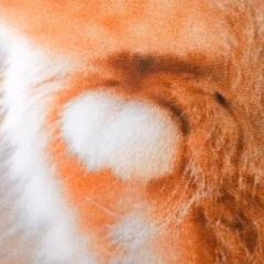 睾丸/動物病院/去勢手術/LIMIAペット同好会/ペット/猫/... 去勢手術前の 貴重な、丸いふぐり【睾丸】…