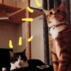 恐怖/雷/LIMIAペット同好会/ペット/猫/にゃんこ同好会 昨日の真夜中、雨がふり、 家のちかくで雷…(1枚目)