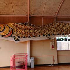 春のフォト投稿キャンペーン/はじめてフォト投稿 幼稚園の真鯉