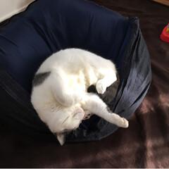 愛猫/ペット 寒い日が続きます😭らんまる様は寒くなると…(1枚目)