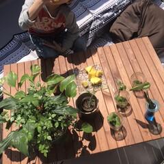 レジャーシート(キャンプマップ) | COLEMAN(レジャーシート)を使ったクチコミ「今日はベランダで 植物の日光浴ついでに …」