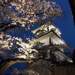 夜桜/お花見/桜/城/春のフォト投稿キャンペーン/春/... 長男が撮ってた夜桜とお城 (をマネして私…