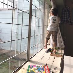 出窓/カーテン/おうち 次男の朝のおしごと カーテンを開けてくれ…