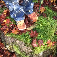 4世代旅行/旅の思い出/もみじ狩り/旅行/秋/風景/... 雨の日の翌朝 温泉宿のお庭の苔たちがすご…