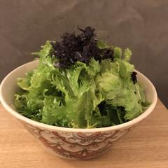 野菜たっぷり/簡単副菜/サラダ/副菜/副菜レシピ/食事情/... 4束40円だったわさび菜のチョレギサラダ…