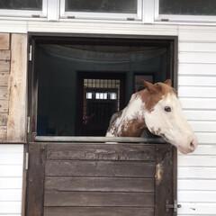 旅の思い出/4世代旅行/旅行/風景/旅 牧歌の里♬ このお馬さん、8年くらい前?…