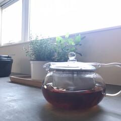 ハリオ 茶茶急須 丸 CHJMN-45T 急須 お茶 | ハリオ(急須)を使ったクチコミ「朝はコーヒー派なのですが、 切らしてしま…」