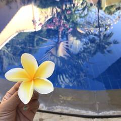 trip/海外旅行/旅行/旅の思い出/バリ/風景/... 毎年恒例の3世代bali旅行✈️ 小さい…