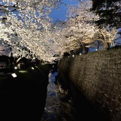 城/桜/お花見/春のフォト投稿キャンペーン/春/おでかけワンショット 今年は長ーく桜が楽しめています♬ これは…(1枚目)