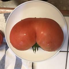 トマト/家庭菜園/子どもと暮らす/おでかけ/暮らし/おでかけワンショット ひいじいちゃんの畑で見つけたおしりトマト…