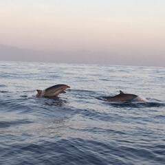 イルカ/イルカウォッチング/バリ/海外旅行/風景/旅行/... バリ旅行写真 イルカの町から船に乗って1…