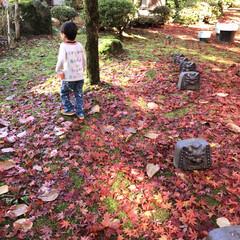 もみじ狩り/旅の思い出/4世代旅行/旅行/秋/風景/... もみじのじゅうたん♡ こんなキレイな紅葉…
