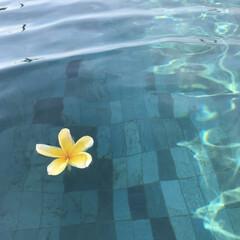 風景/子連れバリ/バリ/海外旅行/旅行/夏のお気に入り バリで借りるヴィラの条件は プールが貸切…