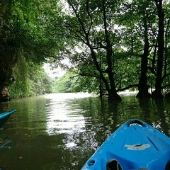 アウトドア/LIMIAおでかけ部/旅行/風景 マングローブのカヌー体験。ガイドさんの生…