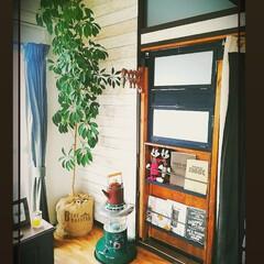 観葉植物のある暮らし カポック大きくなりました🌿 10㎝ぐらい…