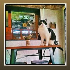 猫/はちわれ猫/ねこ/LIMIAペット同好会/にゃんこ同好会 おはにゃん🐱 今日は天気いいにゃ〰️🌞 …