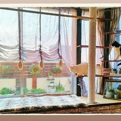 お花/ベランダガーデニング/ガーデニング/LIMIAペット同好会/ペット/ハンドメイド/... 私のお気に入りのベランダガーデン お部屋…
