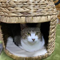 「猫ちぐら&ホットカーペット あったかいネ…」(1枚目)