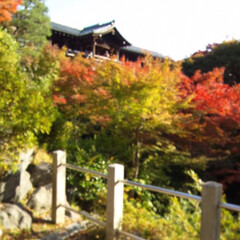 秋/京都/紅葉/東福寺/本坊庭園 数年前の東福寺。 CMとかで有名になる前…