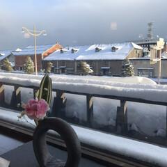雪/朝/小樽運河/冬/風景 空気がピンっと冷えている朝。 雪雲が…こ…