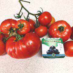 トマト/家庭菜園/ちゃちゃまる/ペット 🍅こんなに大きくなりました❣️って、子犬…
