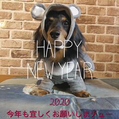あけおめ/ことよろ/いいねありがとうございます/お正月2020/フォロー大歓迎 新年✨あけまして🎍おめでとう㊗️ございま…