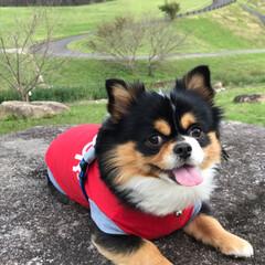 公園/栗拾い/空🐶/うちの子ベストショット/ペット/犬/... 山の方へドライブ🚗 広〜い公園でリードを…