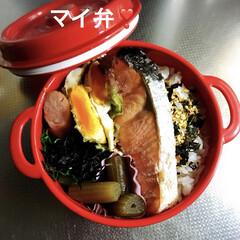 鮭/お弁当/フード 今日のお弁当🍱 鮭の美味しいのが買えたか…