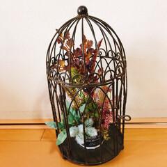 リミ友に感謝/籠にお花をin💐/雑貨/みんなにおすすめ 🐻さんに頂いた籠❗️  こんな感じに出来…